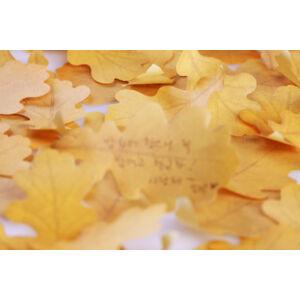 Tölgyfa levél öntapadós jegyzettömb S
