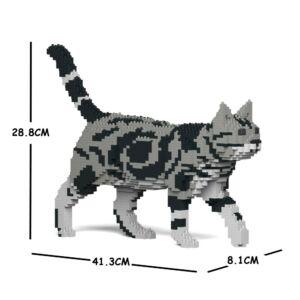 JEKCA - Sétáló Amerikai rövidszőrű macska