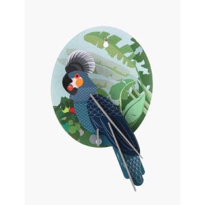 Papagáj Falidísz 1