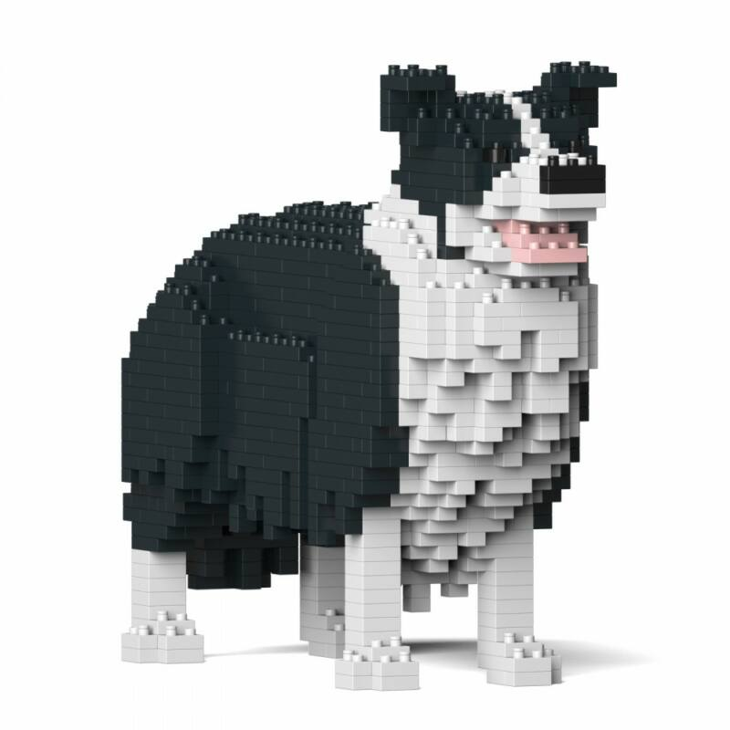 Jekca-Border Collie